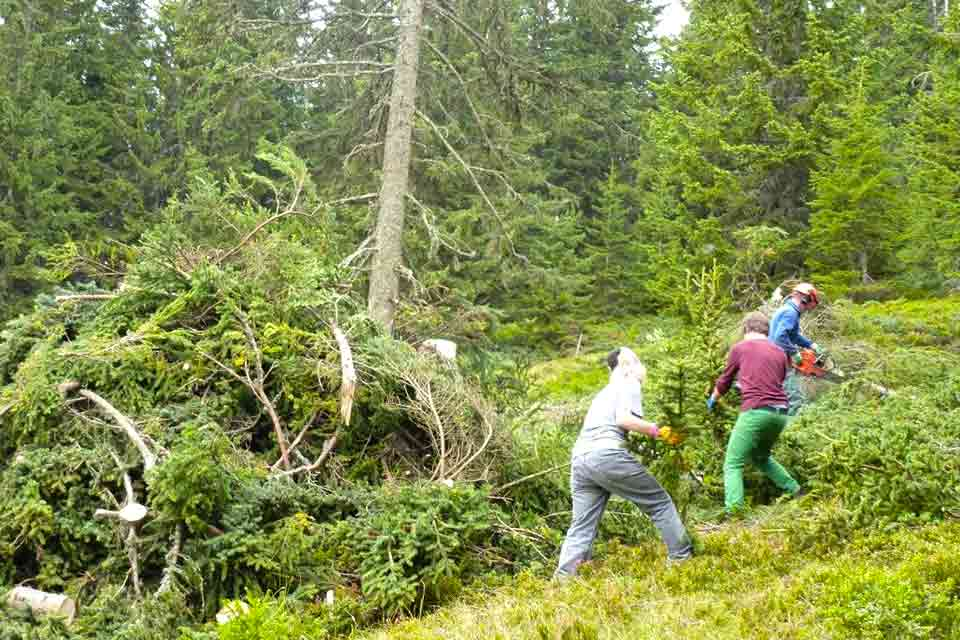 Schüler beim Praktikum im Wald / Forstwirtschaft