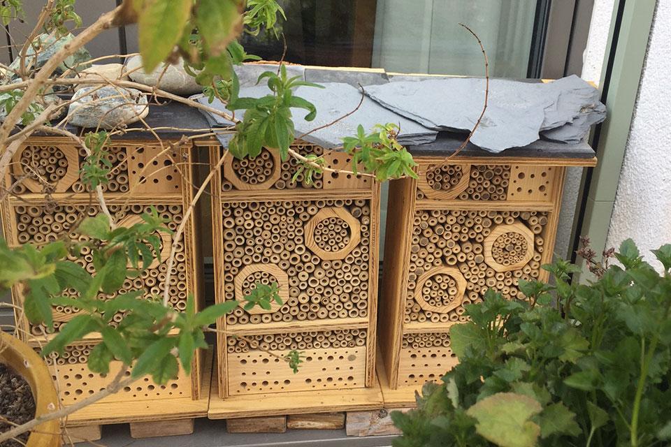 Wildbienen- und Pflanzen-Projekt auf dem eigenen Balkon