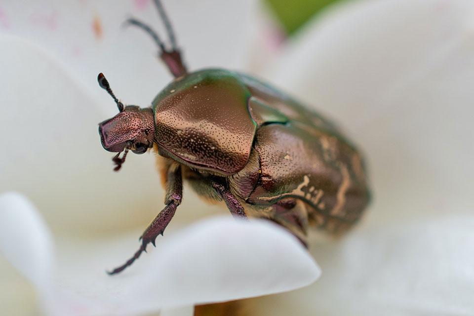 zur Insektenbilderjagd auf www.nabu.de