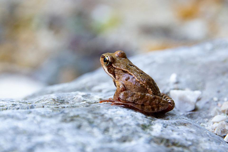 zum Projekt iNaturalist auf letsdigi.de